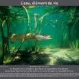 """En complément de l'EPI """"l'aquaponie à travers les âges"""" mené par M. BEYNEIX, enseignant en histoire-géographie, en classe de 3e, le CDI met en place une exposition sur le thème […]"""